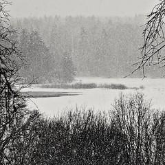 :::: (Stefano Rugolo) Tags: stefanorugolo pentax k5 pentaxk5 ricohimaging snowing monochrome landscape tree lake hälsingland sverige sweden blackandwhite