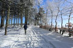 IMG_0231 (rudolf.brinkmoeller) Tags: eifel wandern natur eifelsteig hohesvenn