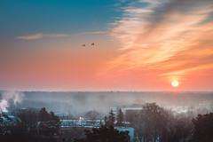 Morning (Gražvydas L.) Tags: druskininkai sunrise birds sky city ciyscape fog colorful clouds sun canon canon6d winter