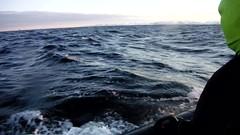 Video - Watching Orcas off the coast of Andoya, Norway (Paul Cottis) Tags: orca killerwhale dolphin cetacean marine mammal paulcottis arctic winter andoya andenes norway video roughsea 30 jan 2018 zodiac