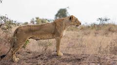 Nairobi-Nationalpark-9584 (ovg2012) Tags: kenia kenya nairobi nairobinationalpark