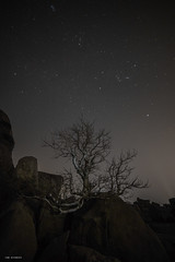 indian ghost tree (Sterculia urens) (sami kuosmanen) Tags: hampi india intia maisema taivas tree travel puu luonto light landscape valo nature asia dark night yö star sky tumma valotus valomaalaus long exposure expression eerie scary pitkä photography rock boulder kivi big