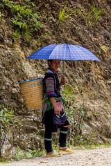 Žena kmene Hmong jako průvodkyně (zcesty) Tags: vietnam26 domorodci vietnam dosvěta làocai vn