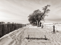 Covered road (w.mekwi photography [here & there]) Tags: plains trees landscape winter backyard nature chilly cold junk scotland fence weather uk snow