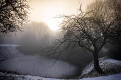Morning Mist (birdsiview) Tags: winter morgen licht garten baum dunst januar