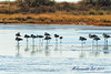 PA230047t_e (mrkevinw08) Tags: portugal algarve parquenaturaldariaformosa parque natural riaformosa