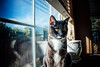 Stormie by the window (bluecoveprods) Tags: cat canon 200d sunlight kitten winter windowsill natural light nature daytime indoors portrait animals photography photoshop tuxedocat clouds