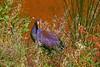 Fauna of Australia! (maginoz1) Tags: australia colours textures fauna abstract art manipulate curves victoria summer february 2018 canon g3x daylesford lake
