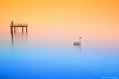 The swan and me (Yarin Asanth) Tags: softness atmosphere swan white orange blue colors colours surface water überlingen lakeconstance yarinasanthphotography gerdkozikfotografie