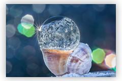 Winterpause (SonjaS.) Tags: bubble frozen frozenbubble seifenblase gefroreneseifenblase schneckenhaus snail shell winter winterpause macro reflektion gegenlicht backlight funkeln sparkle