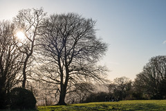 Beech tree and family (Daniel James Greenwood) Tags: boxhill thenorthdowns nikond750 danielgreenwood danielgreenwoodphotography nationaltrust