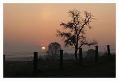 Sunrise III (Rolf Pahnhenrich) Tags: sonnenaufgang sonne canoneos400ddigital landschaft sunrise baum himmel feld morgenstimmung nebel rolfpahnhenrich