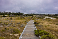 Cloudy day at the beach (randyherring) Tags: asilomarconferencegrounds ca california pacificgrove pacificocean beach historic nature outdoor park recreational