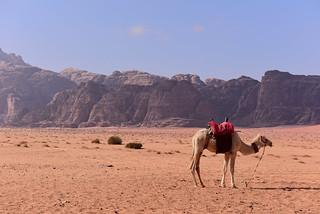 Wadi Rum Desert, Jordan January 2018 868