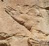 Bavian Gorge , Dohuk (8).JPG (tobeytravels) Tags: kurdistan iraq baviangorge neoassyrian canal gomelriver cuneiform sennacherib assyrian reliefcarvings mesopotamia