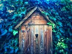 Secret shed (india_snaps) Tags: nature landscapephotography landscape ivy woodenshed gardenshed shed