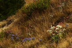 going wild (Jerryhattric) Tags: boulderbay taylorsmistake bankspeninsula newzealand nz panasoniclumixdmcfz200 summer