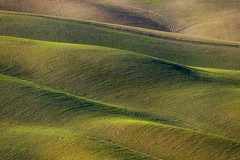 swaying on the hills of the Val d'Orcia (gionatatammaro) Tags: collina hills valdorcia verde green landescape paesaggio toscany italia nikon siena