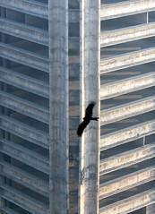 delhi morning bird (kexi) Tags: delhi india asia vertical bird black architecture geometry silhouette flying canon february 2017 motion morning instantfave