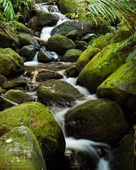 Tranquil Boulder Creek Falls (fentonphotography) Tags: botanicalgarden hawaii unitedstates us bouldercreek waterfall rushingwater moss ferns longexposurephotography