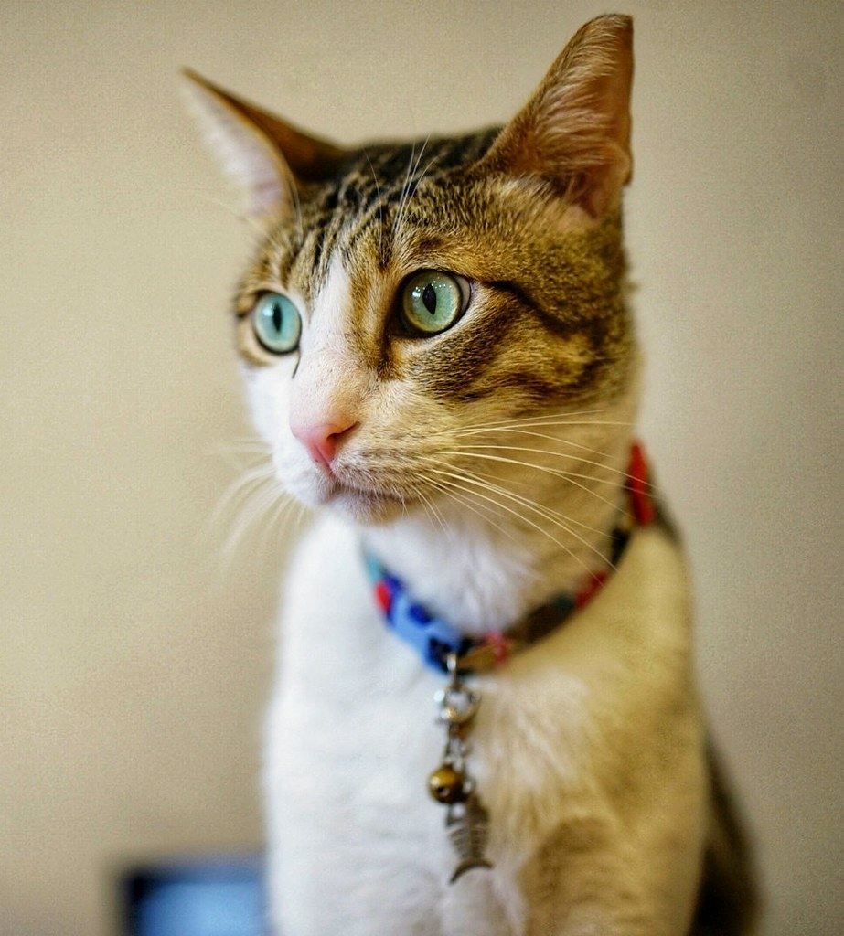 Cat Cafe Bugis