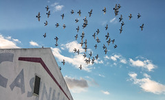 'Synchrony' (Canadapt) Tags: pigeons building sky fly flock loures portugal canadapt