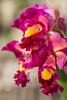 (Fatima Sandrin) Tags: 2018 bauru brasil brazil fátimasandrinfotografia jbmb jardimbotânico jardimbotânicomunicipaldebauru conservação documentação fotografia pesquisa ©2018fátimasandrin