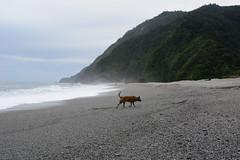 Tigger at Nanfangao 1 (Bob Hawley) Tags: nikond7100 nikon2870mmf3545afd nanfangao yilancounty asia taiwan neipibeach coast outdoors nature seaside dogs taiwantugou pets playing waves surf mountains sand