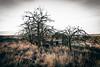 Afraid Of The Dark (Pedalhead'71) Tags: lincolncounty washington abandoned house farm homestead desert rural