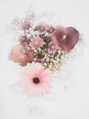 Flowers (janeway1973) Tags: schleierkraut babys breath calla macro makro closeup nahaufnahme