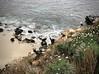 Bird's eye view of the Pacific (kimbar/Thanks for 3 million views!) Tags: lajolla california birds seagull cormorant rocks ocean pacificocean beach