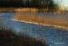 IJzig riet/Icy reed (roelivtil) Tags: 7dwf crazytuesdaytheme doubleexposure dubbelopname landscape landschap newpurposes