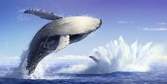 Breaching Whales (Jeremy Norton) Tags: illustration childrens books whale breach splash ocean