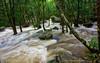 Wet Season (DeanJewellPhotography) Tags: daintree daintreerainforest daintreenationalpark water weather wetseason australia movement motion rainforest queensland rain forest landscape creek capetribulation ngc