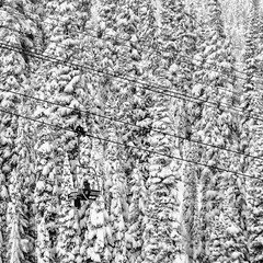 First Run (Mister Day) Tags: snow skiing alpine blackandwhite forest real powder ski lift tiny person rocky mountains canada jasper
