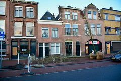 New trees (Michiel2005) Tags: beestenmarkt boom bomen tree trees leiden nederland netherlands holland