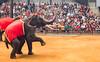 Elephant Darts (jgottlieb) Tags: nong nooch tropical botanical garden pattaya thailand elephant throwing dart darts people watching show trunk tusks leica mp typ 240 summicron 75mm chonburi sri racha