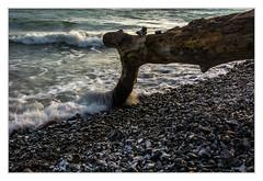 The song of the waves (bavare51) Tags: brandung wellen ostsee balticsea steine totholz rügen sasnitz strand wasser