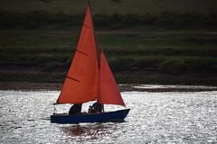 Swallow? Or Amazon? (Worthing Wanderer) Tags: norfolk summer sunny farmland coast seaside nelson holkham burnham hero august