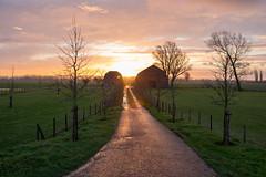 Zeeuws verblijf B&B (Dannis van der Heiden) Tags: farm bb grass sky landscape driveway sweep road tree sheep dusk sunrise clouds happyness barn zeeuwsverblijf d750 tamron2470mmf28 netherlands