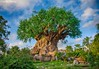 Tree of Life (jbwolffiv) Tags: treeoflife discoveryisland animalkingdom disney disneyworld disneywdw waltdisneyworld wdw nikon d7200 johnwolff wolff