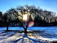 Beautiful Morning ☀️ (shahzad.alvi) Tags: february takenfromiphone winter friday flicker happyfriday canada toronto goodmorning