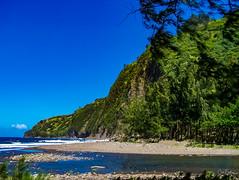 Hawaii-WaipioValley-75.jpg (Chris Finch Photography) Tags: jungle hawaiiphotography waipio taro waipiovalley hawaii landscapephotographs landscapephotography utahphotographer chrisfinch tarofarms chrisfinchphotography photographs bigisland tropical tarofarm wwwchrisfinchphotographycom valley