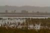 Dixon_JB_476_3989 (Joanne Bouknight) Tags: dixonwaterfowlrefuge greategret illinois mist morning observationtower rain storm thewetlandsinstitute