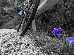 Bike..nature and anemone (panoskaralis) Tags: windflower anemone bike biking idealbikes bikes cycling road roadtrip nature blackwhite blackandwhite colors trees lesbos lesvos lesvosisland mytilene greece greek hellas hellenic outdoor