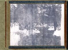 (babireley) Tags: pawilds pottercounty pottercountypa polaroid52 expiredfilm 1998 burkejames4x5press kodakektar127mmf47 winter snow