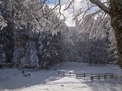 Istanti (Fernando De March) Tags: nevefrondealberiinvernoforestacansiglioboscoalbero