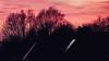 Trees and a pink sunset (CloudBuster) Tags: sunset zonsondergang vandaag today red orange pink sky lucht hemel prachtig amazing cold winter day koude dag friesland fryslân nederland the netherlands colours kleuren zon sun afternoon middag