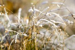 Moring Frost (shetanchan) Tags: 135mm closeupfilter zuiko135mm zuiko135mmf28 winter winterwonderland frost snow ice cold forest forestlove forestview