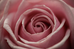 Flowers-4 (Steve Mo) Tags: flowers canon 70d 100mm macro pink roses plants plantlife abstract bokeh